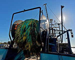 Fisheries impacts rhode island 39 s climate challenge for Rhode island fishing regulations