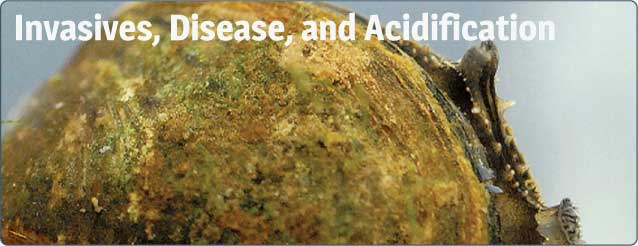 Invasives, Disease, and Acidifcation